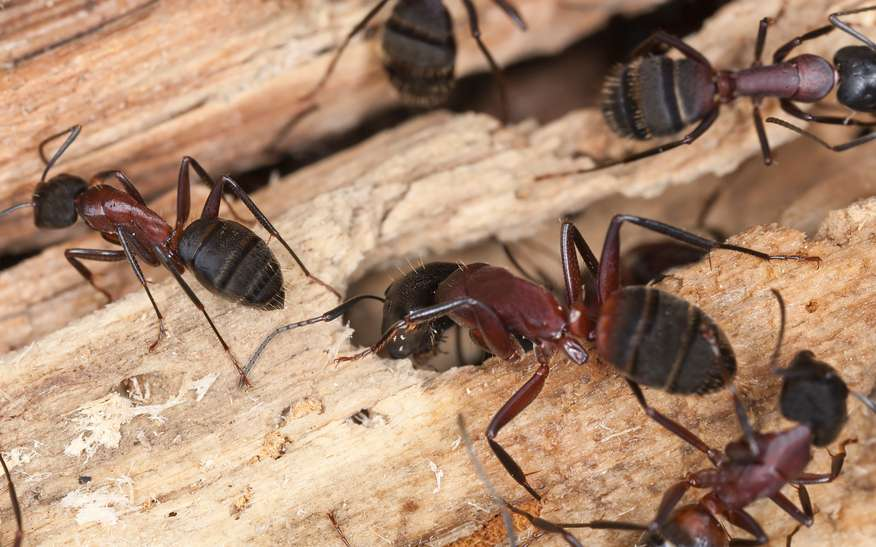 9 Tips To Keep Ants Away