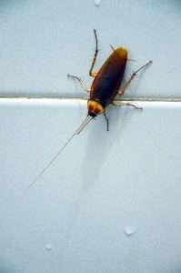 Cockroach on bathroom tile