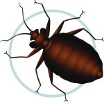 Icon Bed Bug Control