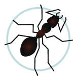 Icon Pest Control Ant