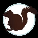 Squirrel Wildlife control icon