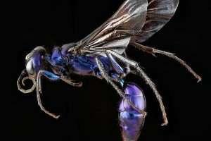 Steel Blue Cricket Hunters