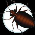 Icon Bed Bug Control