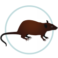 Icon Rodent Mice Rat Control